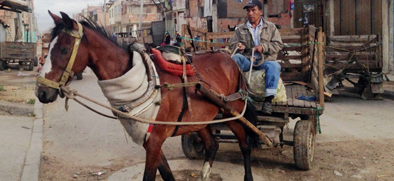 Mistreatment of Horses