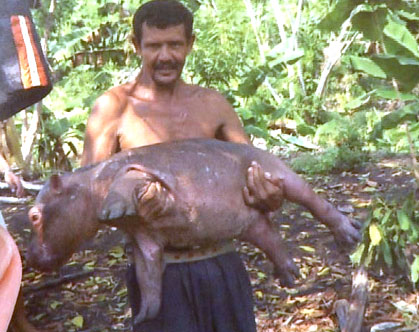 James Torres handling Juaco, a baby hippo  (Photo: Manuel Rueda / Fusion)